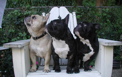 What's in a Name? The Three Frenchies, by Lou Marek