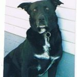 Bootsy Meeks, photo, pet eulogy and testimonial sent to us at Center-Sinai Animal Hospital, Los Angeles