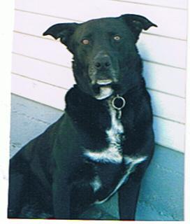 Bootsy Meeks, photo, pet eulogy and testimonial sent to us at Center-Sinai Animal Hospital, Los Angeles