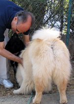Dr. B, What do I do about bald spots on my dog + itchy belly? In this Ask Dr. B column, Dr. Baum agrees sounds like allergies, advises how to diagnose and treat questions,