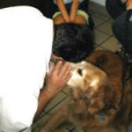 Pet Well Care helps doggie's mom save money, at Center-Sinai Animal Hospital, your Los Angeles Veterinary Hospital