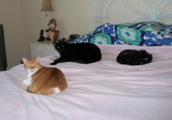 Center-Sinai is honored to share this loving eulogy for her departed pet, Toby Bear Cat, from Lynn Krupp.