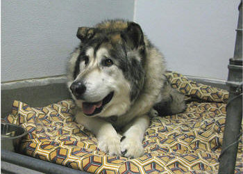Center-Sinai Animal Hospital thanks those who share pet eulogies with us - it helps all in time of loss of a beloved pet.