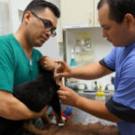 Robert and Hector - Kennel Attendants - Center-Sinai Animal Hospital, working with cat.