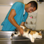 Center-Sinai Animal Hospital Veterinary Assistant Josh B caring for a pussycat. Center-Sinai Animal Hospital Super Saver Low Cost Clinics for Pets save pet parents money while providing needed ongoing and preventative health care for doggies, and cats.