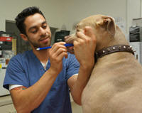 Josh Vet assistant brushes uno dog teeth 150