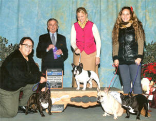 Laila Tov Saga 4 - Champion Dog Show winner!