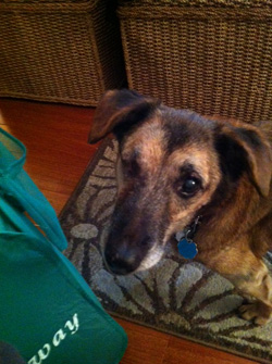 Thank you from the bottom of my heart! CSAH Surgical & post-surgery care-Maddie's a new dog