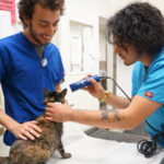 L.A.'s Center-Sinai veterinary hospital Kennel Attendants Nick G and Chris work together on Rosie Cat. Chris's also a Vet Assistant. Cats, dogs, all pets love Nick & Chris! So do humans!