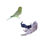 Have you got a trip coming up? Try Denise Molitoris. She's a CSAH trusted pet owner wishing to trade pet sitting services with you. She has cats and a bird.