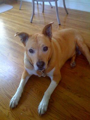 Peaches - Pet Eulogy for dog at Center-Sinai Animal Hospital.