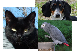 Center-Sinai Animal Hospital Testimonial from Matt Beard-Black Cat, African Grey Parrot, Dachshund extended family members-thanks to photogs Lilith, L.Miguel Bugallo Sánchez, spilltojill