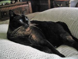 Center-Sinai Animal Hospital testimonial from Kathleen, to Dr. Baum, for care of Ed Cat