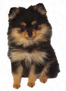 CSAH Testimonial -Yorkie Dog--for Gary-La Duca