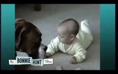 In this adorable short piece, you'll see a baby and Boxer Dog video, as shown originally on the Bonnie Hunt Show. Wonderful dog-human relationship beginning.