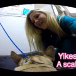 Amazing Vet Visit! Dr. Baum's French bulldog Gadi, Dr. B and the staff at Center-Sinai Animal Hospital star in this fetching ad for GoPro fetch harness.