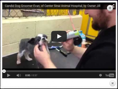 Great video clip of a great doggie grooming clip. Center-Sinai Animal Hospital Star groomer Evan grooming doggie