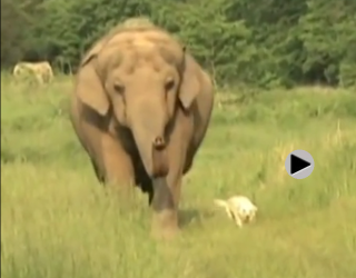 Can the elephant and doggie become friends? Watch this video for the answer!