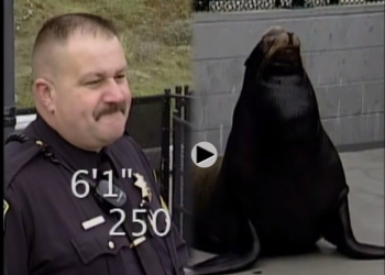 A sea lion who was shot (!) reunites with his rescuer