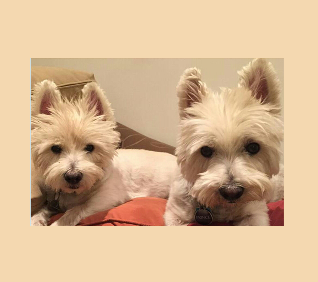 In this eulogy to the best Westies ever, fur mom Juanita, writes lovingly of her two fur babies.