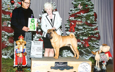 AKC Judge -- Dr. Baum Awards Best Puppy Prize at Shoreline Dog Show