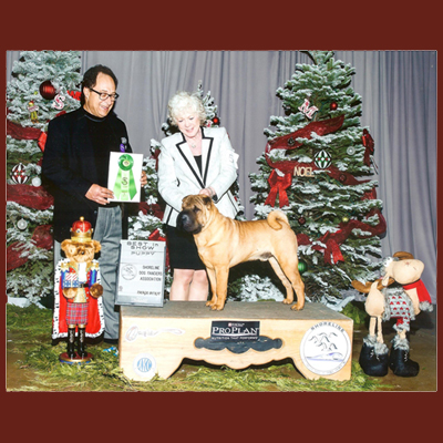 Center-Sinai Animal Hospital Chief of Staff Dr. Baum loves dogs, and in his new sideline as AKC Accredited JJudge awards Best Puppy in Show to this proud dog and owner.